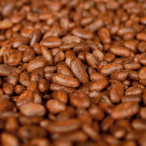 maranon raw cocoa beans